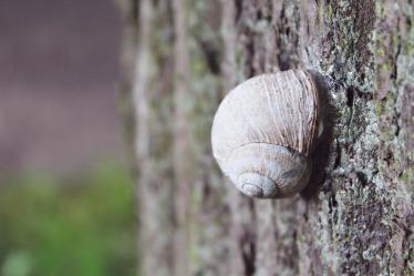 snail-908233_1920